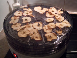 Apples finished drying in dehydrator